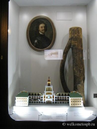Сосна - первый экспонат Кунсткамеры