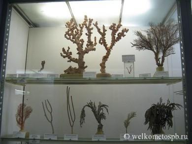 Древовидные кораллы