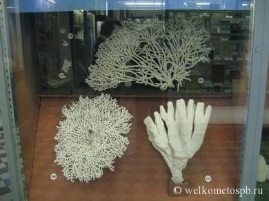 Белые кораллы