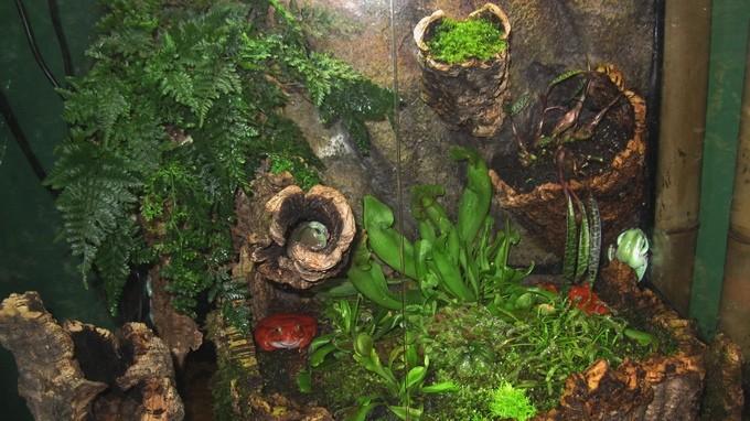 Лягушки в аквариуме